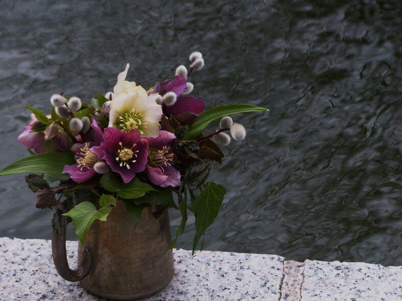 摩羯新娘的堅忍性格可以說是一大美德,和倔強而溫柔的聖誕玫瑰特質