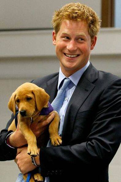 Prince harry 和 Spinee