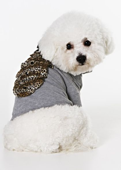 Roberto Cavalli pet collection fashion accessories