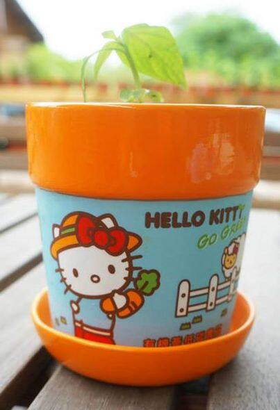 Hello Kitty 花盆$68